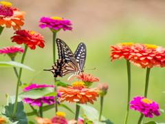 花と蝶 (*゚▽゚*)v