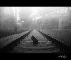 Black Cat and Railway.