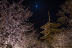 月夜桜の宴