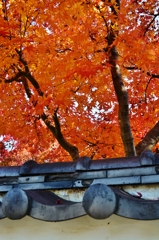 紅葉の見頃は晩秋