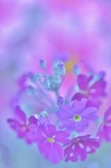 「春の歌」