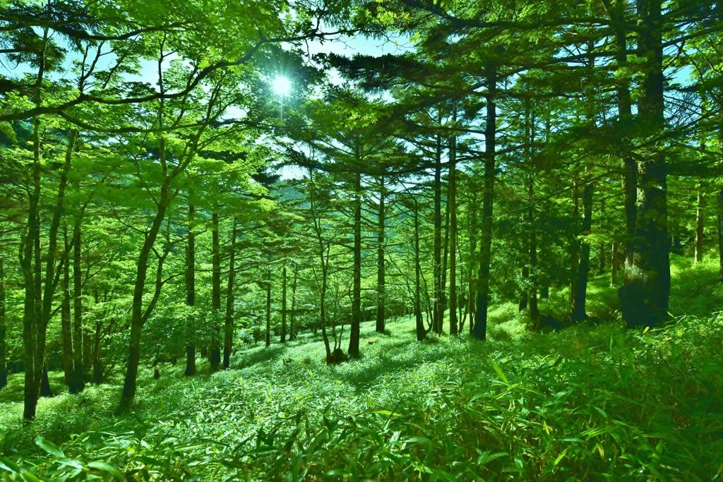 「空気に染まる緑」 ~PHOTOHITOの皆様へ、猛暑お見舞い申し上げます~