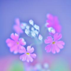 「ゆる~い お花の世界」