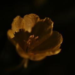 「雨に咲く」