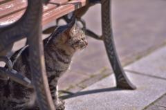 「神戸の海を眺める猫」