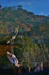 嵐山を背にする 蒼鷺 ~京都嵐山晩秋紀行~