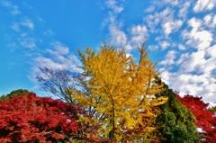 秋晴れ ~京都嵐山晩秋紀行~