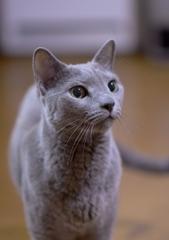 「愛猫倶楽部」