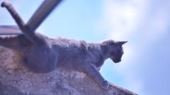 「それじゃ 私は屋根の鳩を獲らせてもらうわよ!」