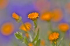 「春のビタミンカラー オレンジ♪」