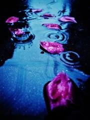 「薔薇の花びらと雨のクラウン」