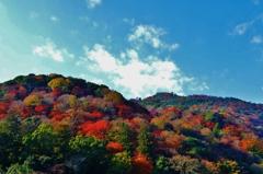 晩秋の嵐山 ~京都嵐山晩秋紀行~
