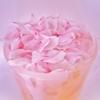 「締めの桜」
