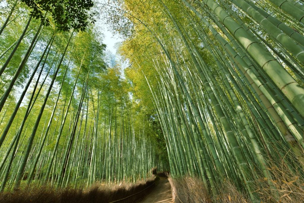 「竹林の道」
