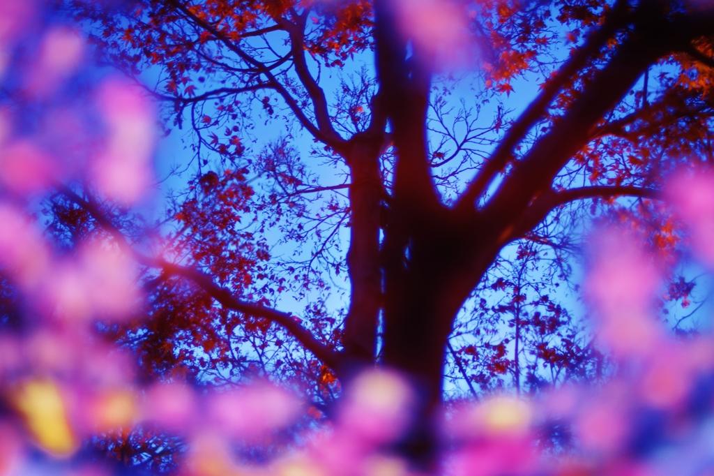 「紅葉の水鏡」