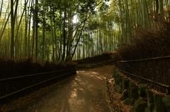 「竹林の夜明け」