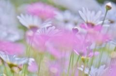 「春のお花畑」