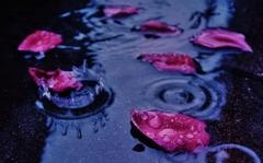 「薔薇が咲く 薔薇が散る」