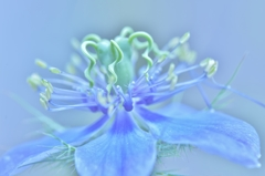 「複雑で不思議なお花」