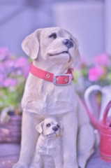 Umi & Buddy for Mr.Puppy walker.