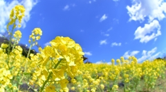 「春のビタミンカラー イエロー♪」
