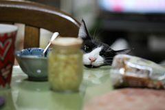 食べたいにゃん!