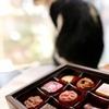 猫にチョコレート