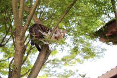 猫寺の猫は鳥になる