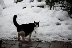 雪の日の冒険