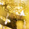 神が宿る銀杏の木