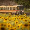 夏を駆ける列車