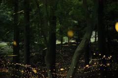 流れる光の小川