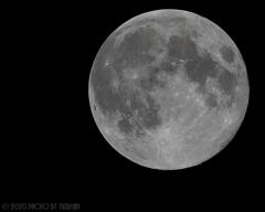 昨夜の花月