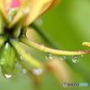 梅雨のビー玉