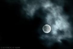 素敵な夜の名月