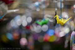 玉ボケの中の鶴