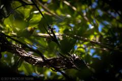 竹林の中の秘め事
