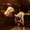 大恐竜展 in国立科学博物館