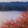 雲海と紅梅