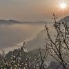 朝霧の月ヶ瀬梅林