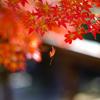 奈良二月堂の紅葉