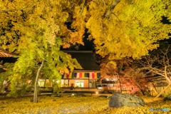 秋の葉に塗れる
