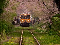 津軽鉄道 芦野公園駅にて。(あんずましの景色で、わはどってんこぐ。)