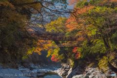 one lovely autumn scene. (かずら橋)
