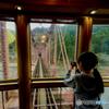 ポニーテールの少女(球磨川第一橋梁を渡っています)
