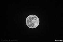 世の中に おなじ影にて 澄める月かな