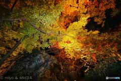 宝厳院 五彩の紅葉