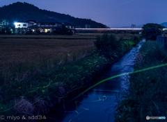 ホタル(近江長岡 天野川周辺)