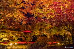 永観堂の紅葉がさね