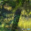 波紋 (十二湖 沸壺の池)